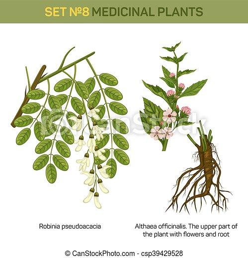 illustration vecteur de plante robinia guimauve fond fleur locuste sommet csp39429528. Black Bedroom Furniture Sets. Home Design Ideas
