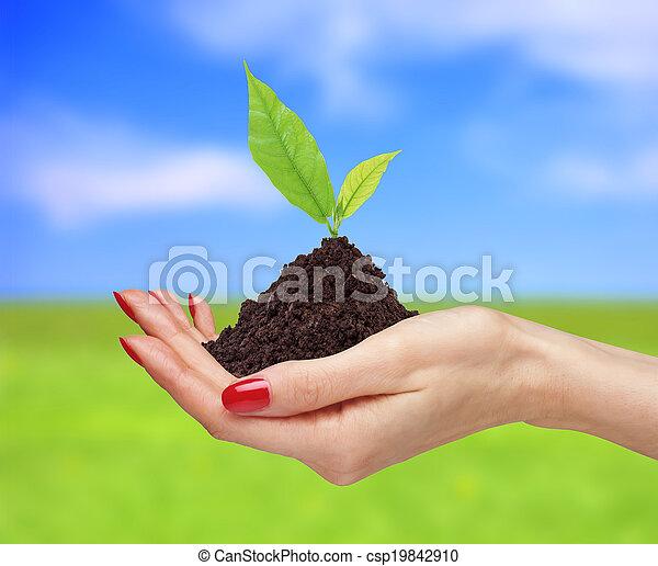 plante, tenue, nature, sur, femme, clair, arrière-plan vert, mains - csp19842910