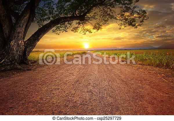 plante, terre, grand arbre, dustry, pluie, scène, scape, route rurale - csp25297729