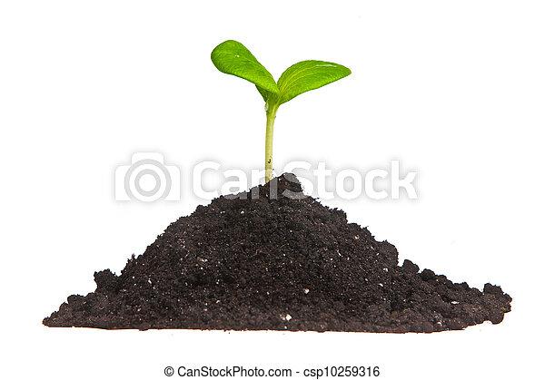 plante terre pousse isol vert tas plante tas terre pousse isol arri re plan vert. Black Bedroom Furniture Sets. Home Design Ideas