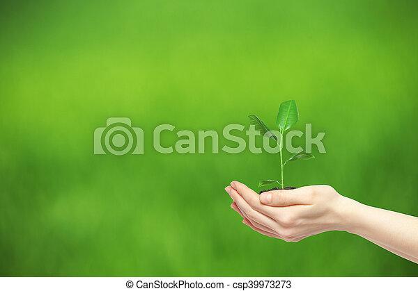 plante, vert, tenant mains - csp39973273
