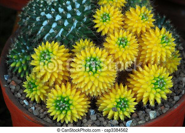 plante interieur jaune