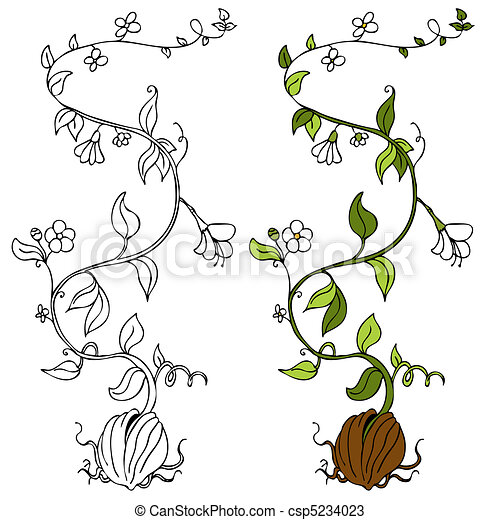 plante, vigne - csp5234023