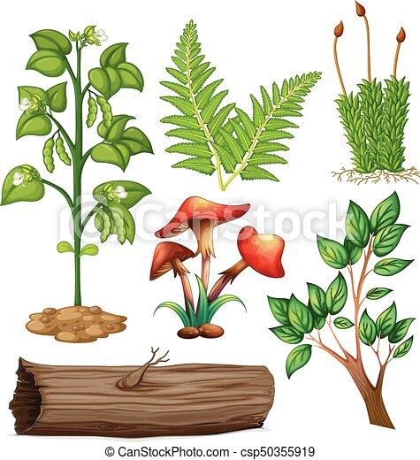 planten, anders, types - csp50355919