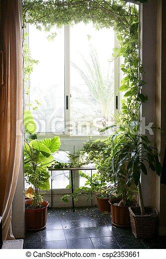 planten, woning, kamer, backlit - csp2353661