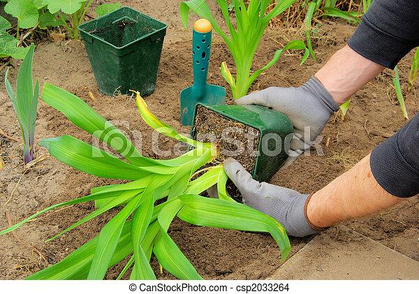 planter, 01, daylily - csp2033264