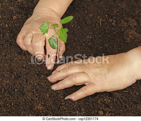 Planting a sapling - csp12301174