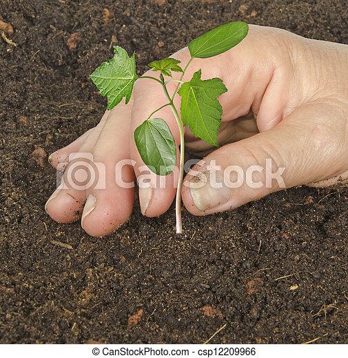 Planting a sapling - csp12209966