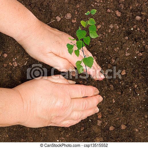 Planting a sapling - csp13515552