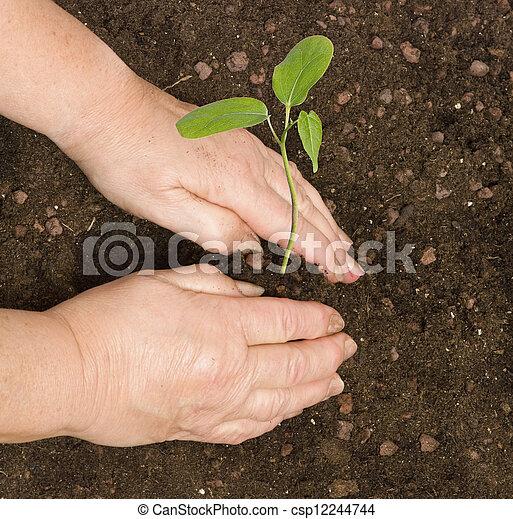 Planting a sapling - csp12244744