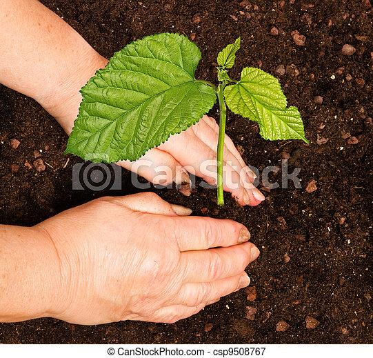 Planting a tree - csp9508767
