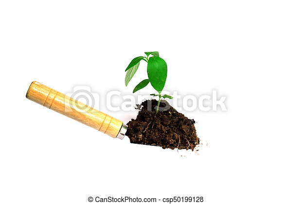 planting a tree - csp50199128