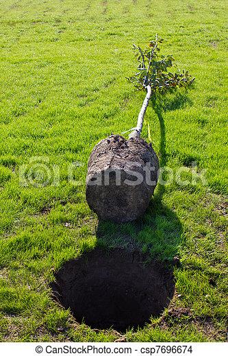 planting a tree - csp7696674