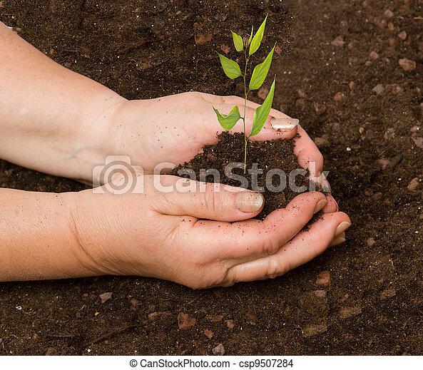 Planting a tree - csp9507284