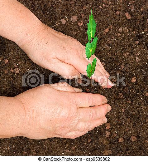 Planting a tree - csp9533802