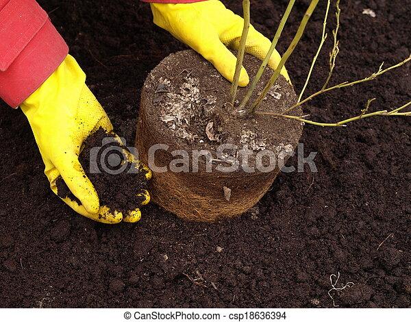Planting a tree - csp18636394