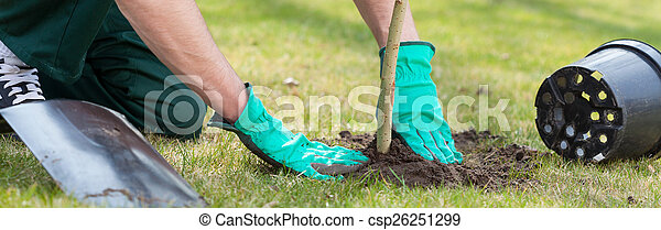 Planting a tree - csp26251299