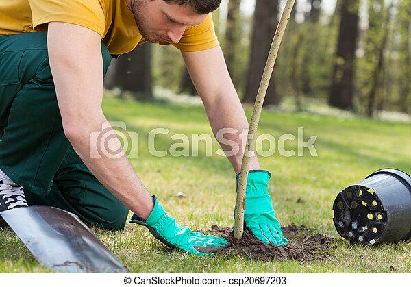 Planting a tree - csp20697203
