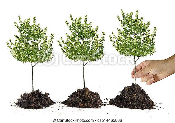 Planting tree - csp14465886