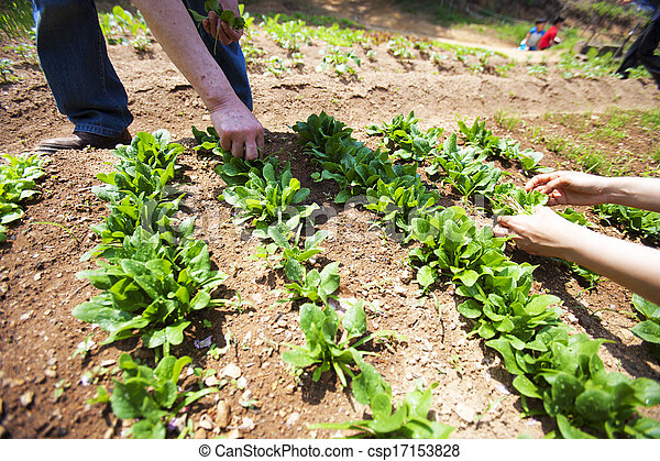 Planting vegetable garden stock photo - Search Pictures and Photo ...