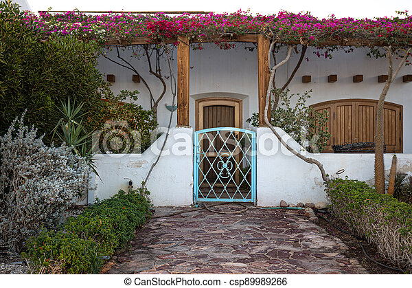Plants in a tropical garden in the backyard. - csp89989266