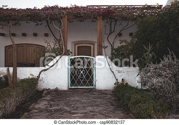 Plants in a tropical garden in the backyard. - csp90832137
