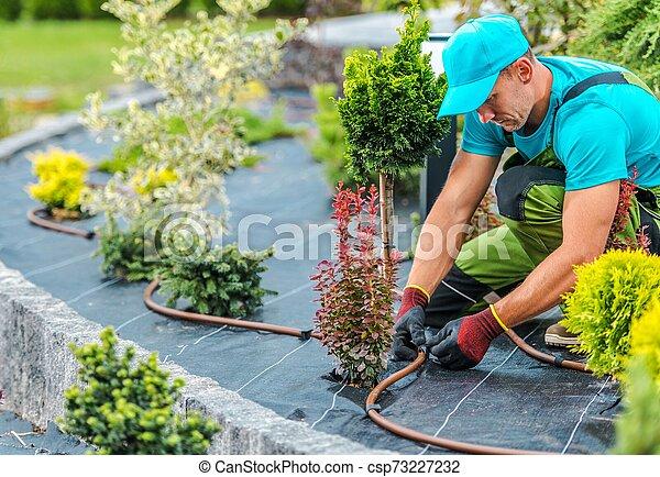 Plants Irrigation System - csp73227232