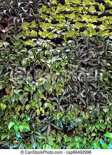 plants on garden wall - csp66492996
