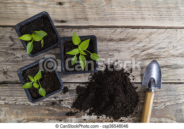 Plants with compost and trowel - csp36548046