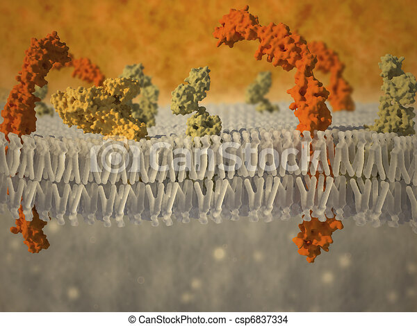plasma membrane of a cell with associated proteins - csp6837334
