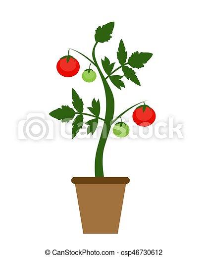 Plat plante jardin moderne style buisson vecteur for Plante jardin moderne