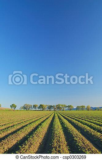 platteland, landelijk - csp0303269