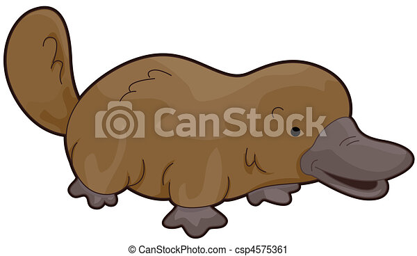 platypus walking to the right isolated against white background rh canstockphoto com cute platypus clipart platypus clipart free