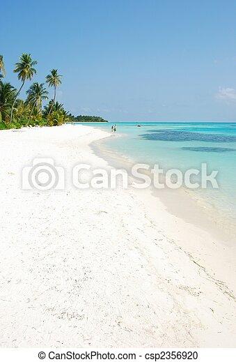 El paraíso de la playa con palmeras - csp2356920