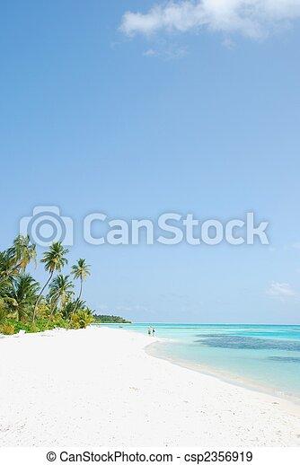 El paraíso de la playa con palmeras - csp2356919