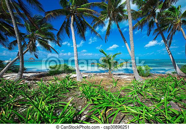 Playa - csp30896251