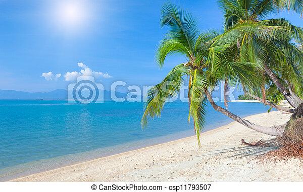 Playa tropical con palma de coco. Maeman Beach, koh samui, thailand - csp11793507