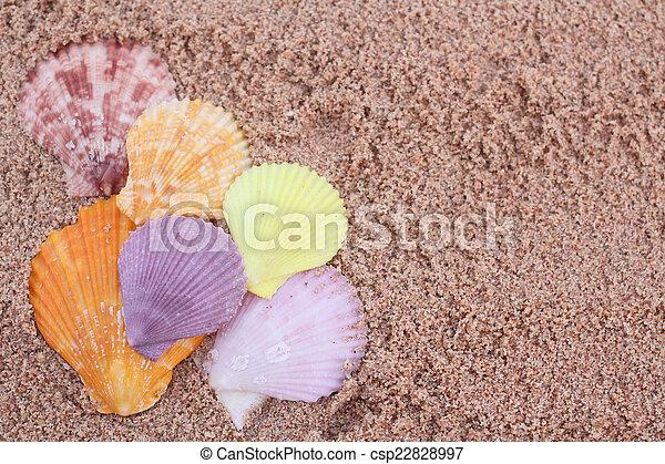 Conchas en la playa - csp22828997