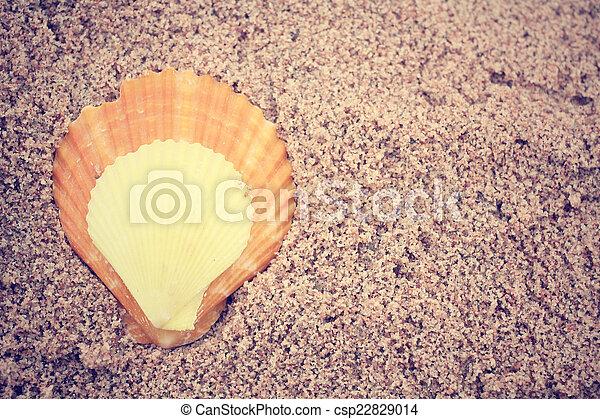 Conchas en la playa - csp22829014