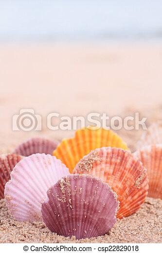 Conchas en la playa - csp22829018