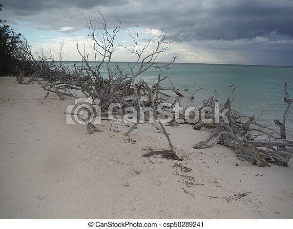 Playa - csp50289241