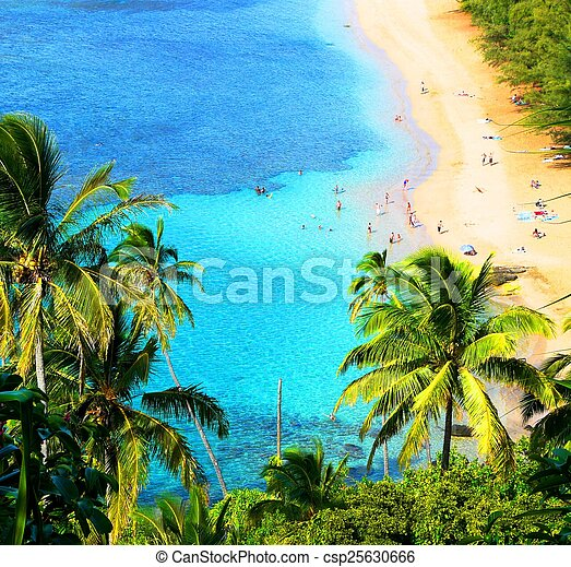 Playa hawaiana - csp25630666