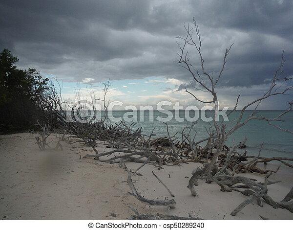 Playa nublada - csp50289240
