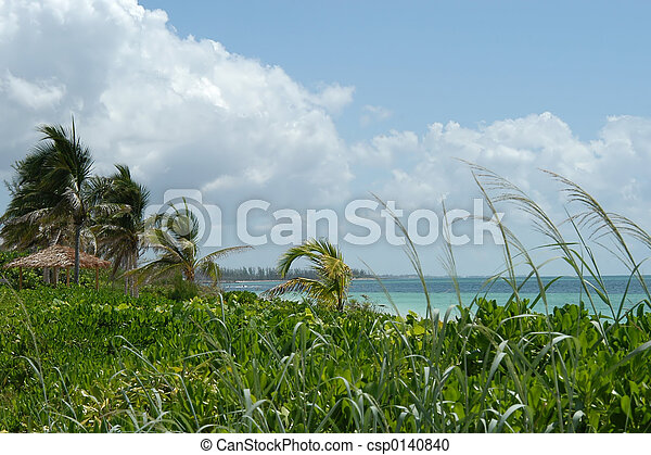 Playa y palmas - csp0140840