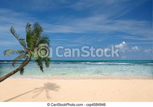 playa, palmera, solitario - csp4584946