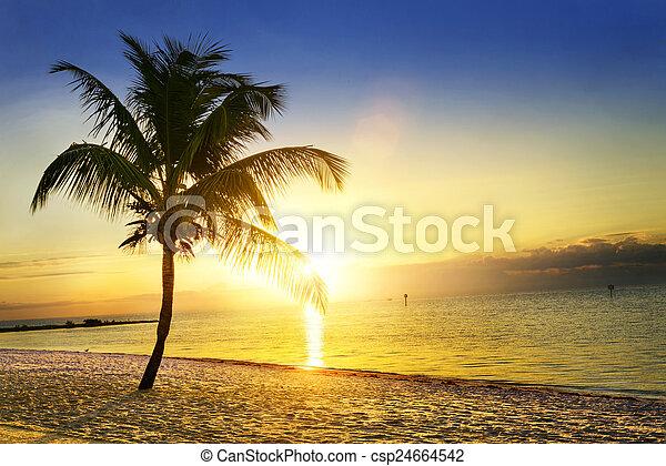 Sunset en la playa - csp24664542