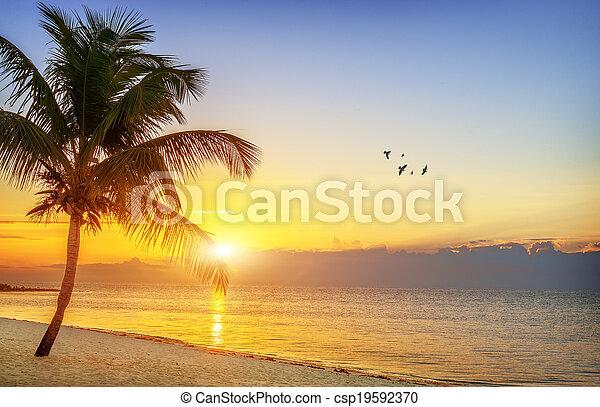 Sunset en la playa - csp19592370