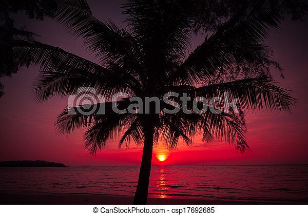 Silueta de palmeras en la playa tropical. Una puesta de sol tropical - csp17692685
