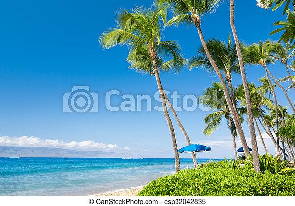 Playa tropical - csp32042835
