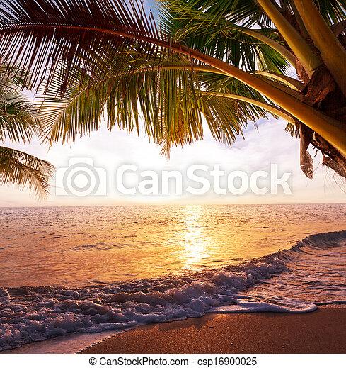 Playa tropical - csp16900025
